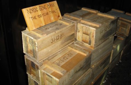 Wooden boxes with dates unscripted standing in a dark container.