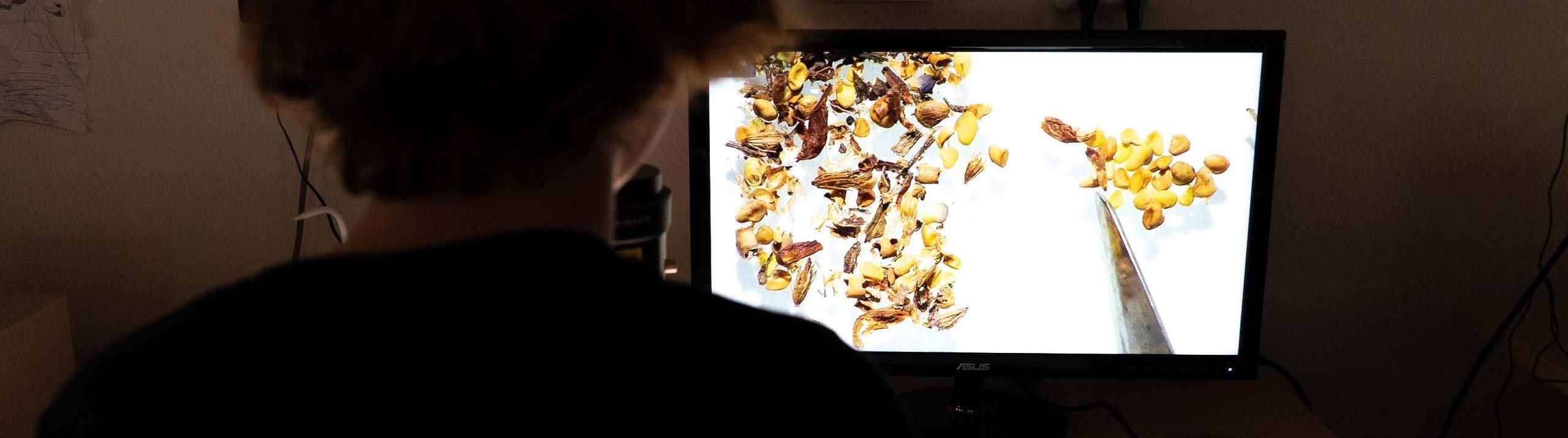 Kvinna med NordGen-tröja sitter framför en skärm med bild på uppförstorade fröer