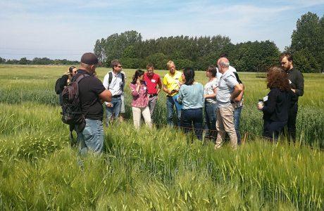En grupp människor diskuterar ståendes i en odling av spannmål med blå himmel i bakgrunden.