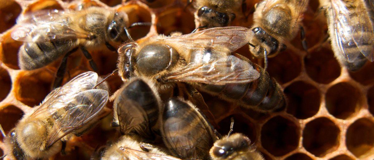 Mehiläiset työnteossa
