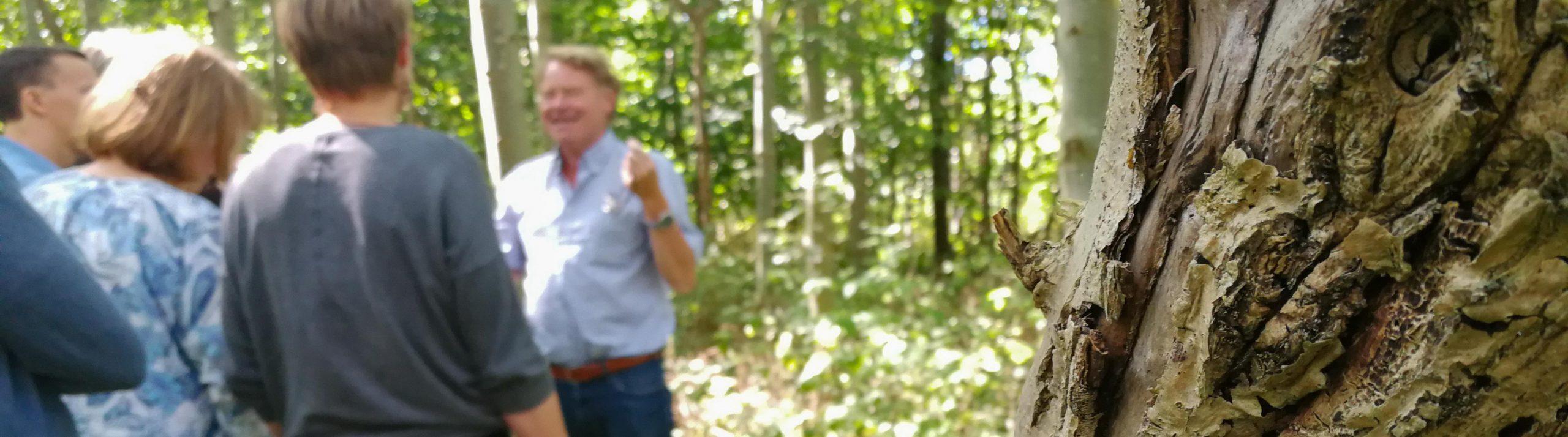 Närbild på en askstam med en man som håller en presentation för andra människor i bakgrunden.