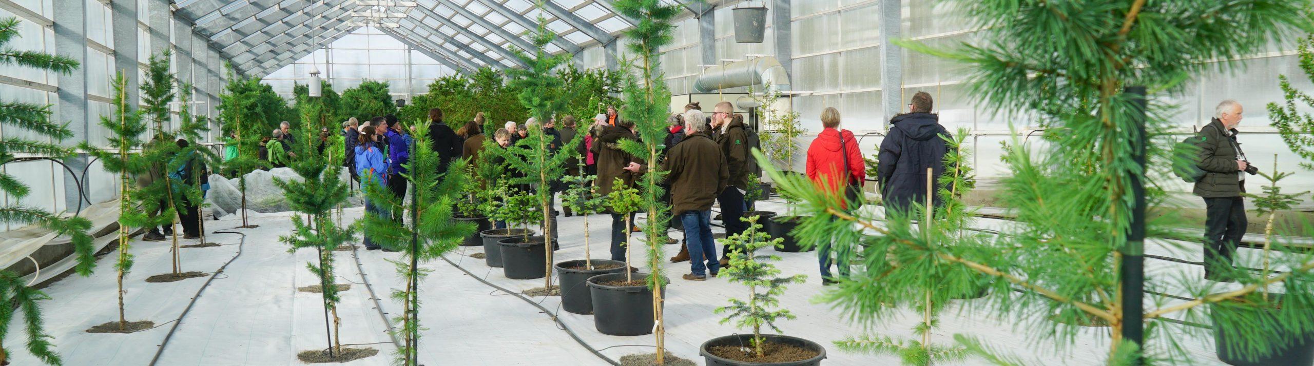 Trädplantor står i krukor i ett växthus. Människor går omkring och tittar.