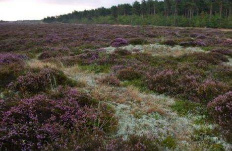 Heathland, Demanrk