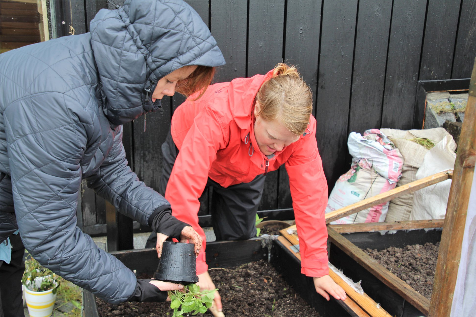 Gunn Hernes och Hulda Götmark planterar ätbara växter i pallkragar utanför Nordens Hus på Färöarna.
