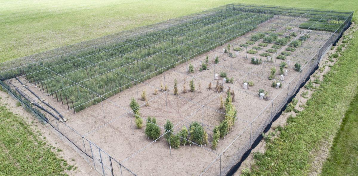 Bild tagen högt uppifrån av ett grön fält med olika växter