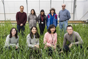 Nine people, employed at the GRU at JIC stand in a greenhouse