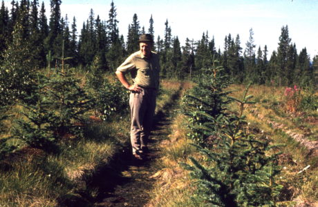 Man standing in a spruce plantation. Photo taken in 1971.