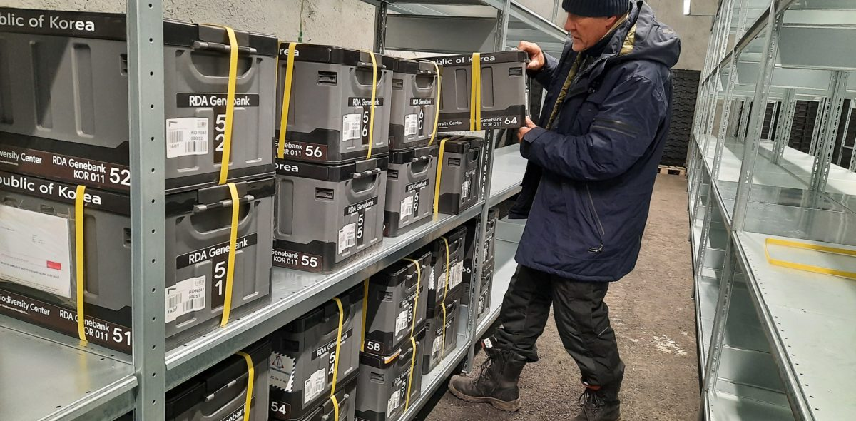 NordGenin siemenholvin koordinaattori Åsmund Asdal Huippuvuorten siemenholvin sisällä tallettamassa Etelä-Koreasta saapuneita siemeneriä.