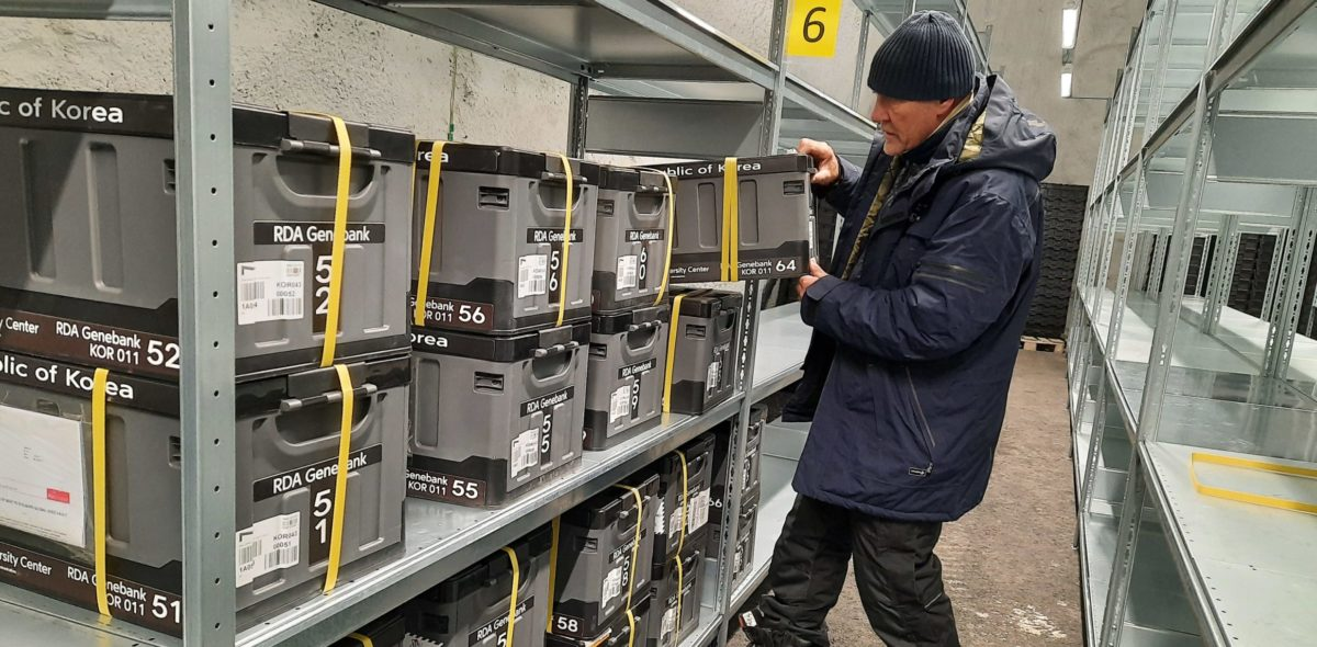 NordGen's Åsmund Asdal putting seed boxes from South Korea in place in the Seed Vault