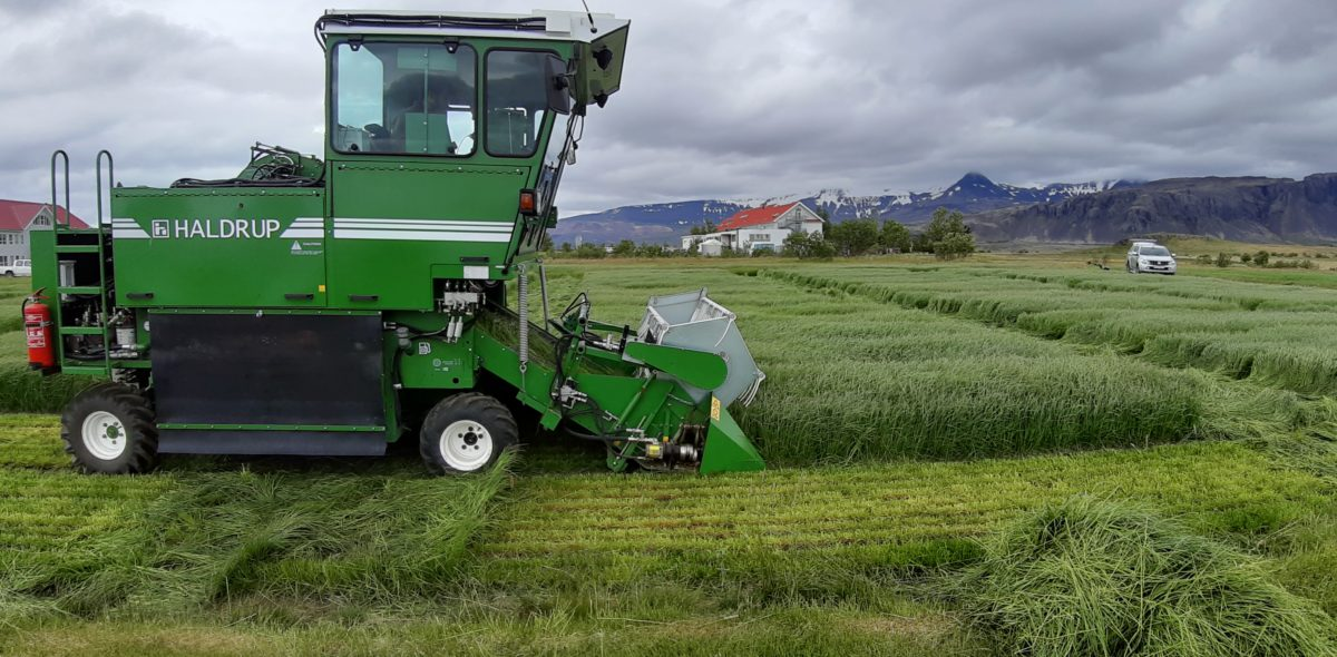 Combine harvester at a field with perennial ryegrass