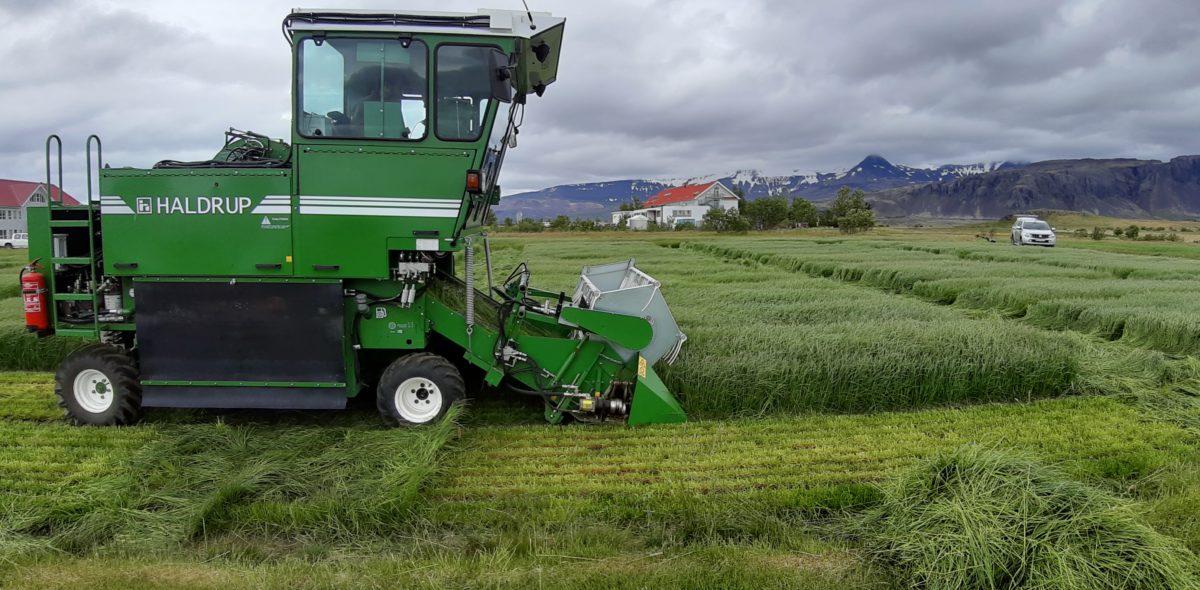 Skördetröska kör på ett fält med grönt rajgräs