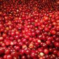 Closeup of red berries
