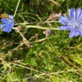 Top view of lavendel colour flowers