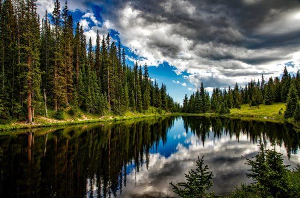 Gammal granskog speglar sig i en skogssjö. Blå himmel och moln i bakgrunden.