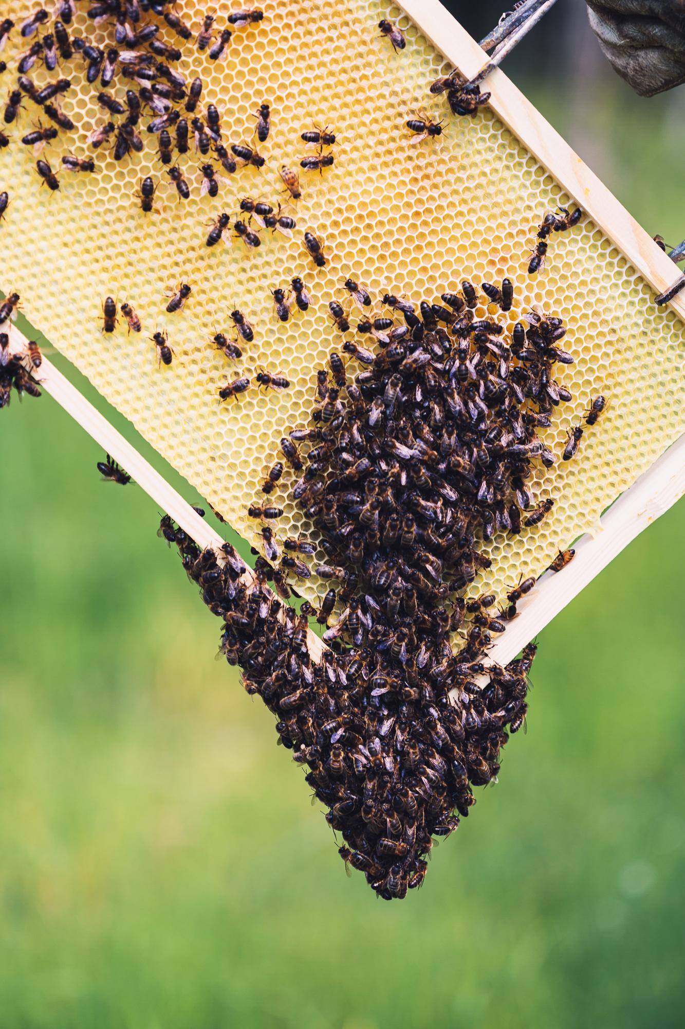 bin som kryper ovanpå varann och bildar högar