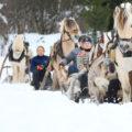 Norsk fjordhest i vinterlandskap med snö och släde