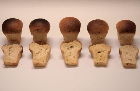 Testbröden som bakades i NordGens studie av enkorn och emmervete.