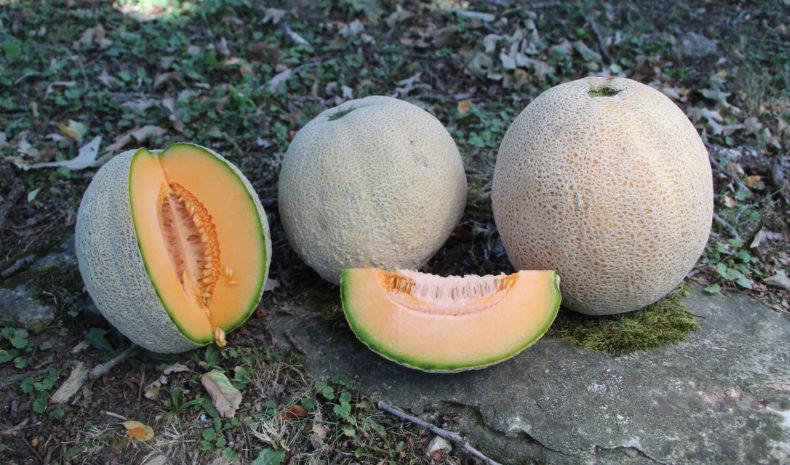 SSE:s deposition innehöll bland annat frön från melonsorten Level.