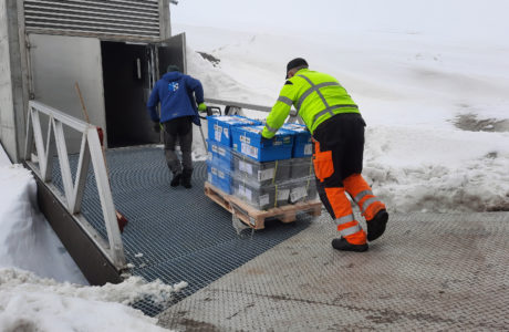 Lådor med fröprover förs in i frövalvet på Svalbard.